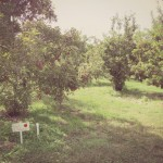 Apple Picking With Jack & The Easiest Apple Pie Ever