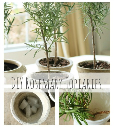DIY Rosemary Topiaries-City Farmhouse Feature