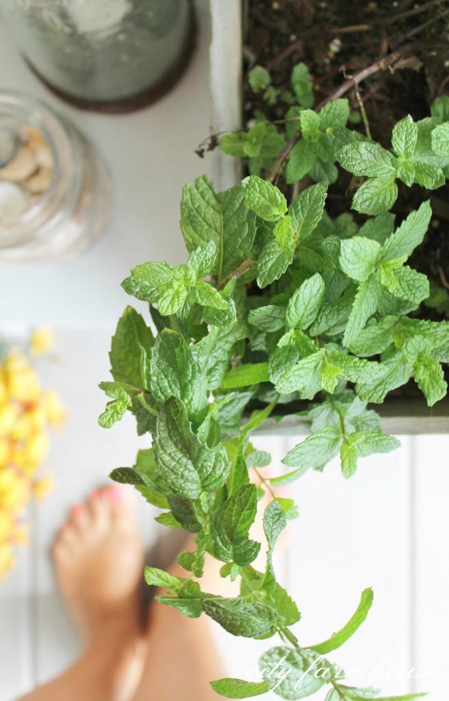 Fall Pronch Porch-Bountiful Mint