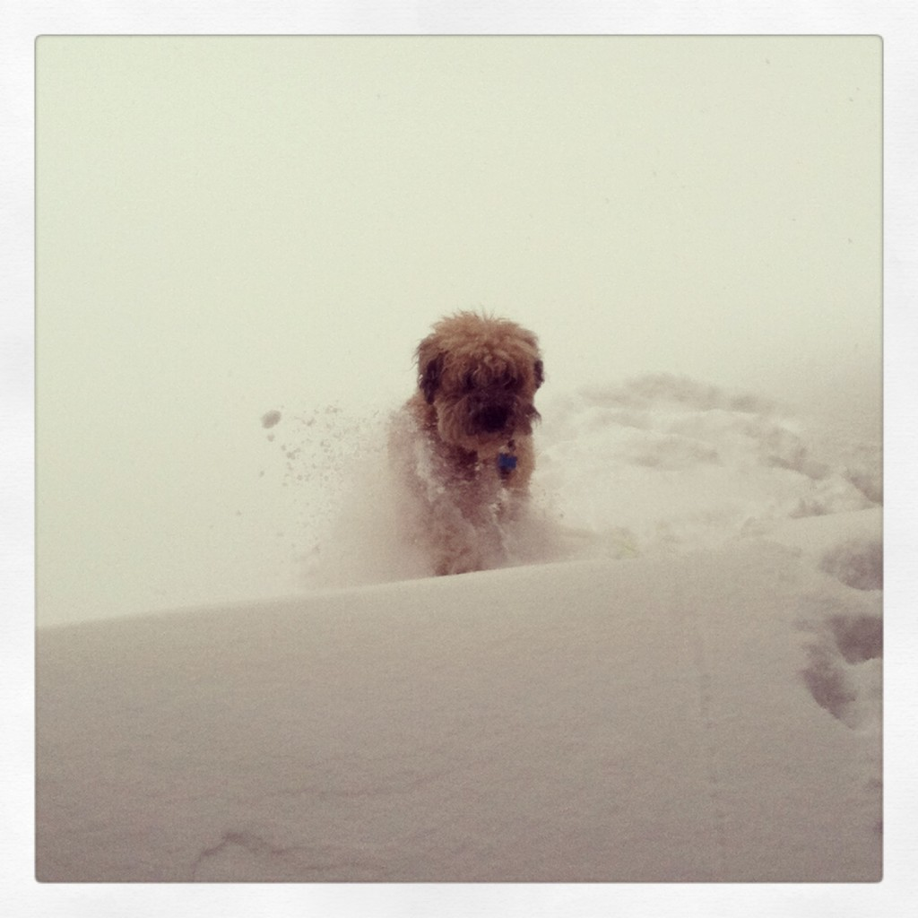 Murphy Playing in the Snow