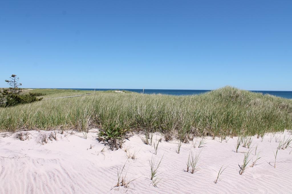 Beach Club-Beach Grass