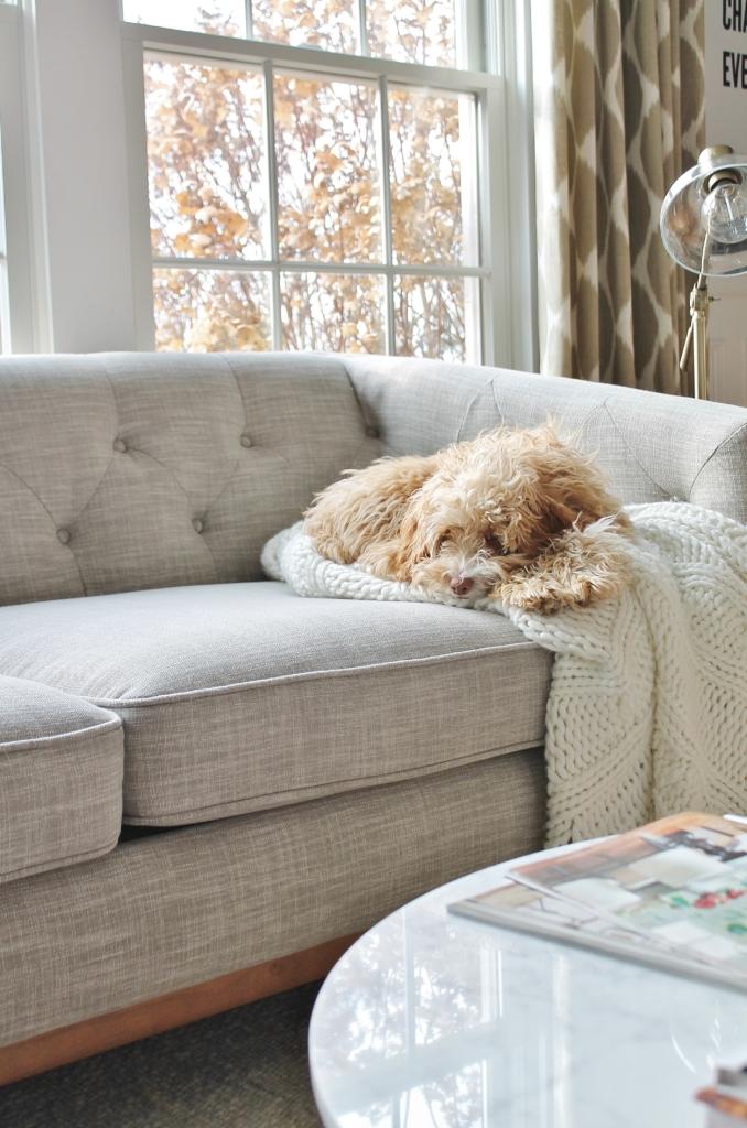 City Farmhouse Den Reveal Pre Paint-Pup
